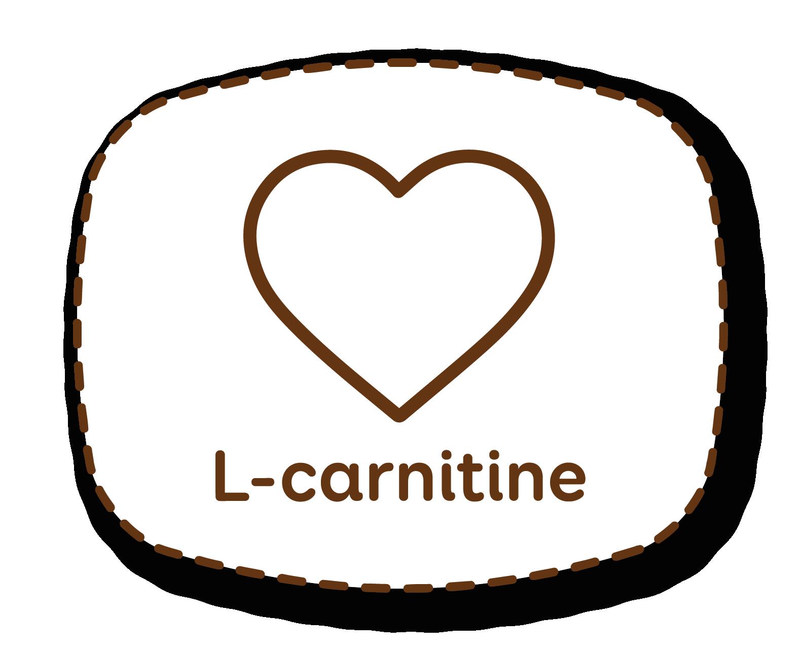 L-carnitina: favorece el tono muscular ayudando a quemar mejor la grasa subcutánea
