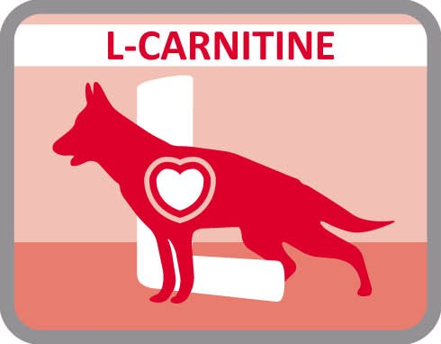 Incorporar L-carnitina para activar el metabolismo de las grasas